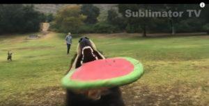 Смешные собаки видео приколы - самые забавные и лучшие