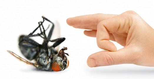 Как избавиться от мух в доме - эффективные средства и советы 1