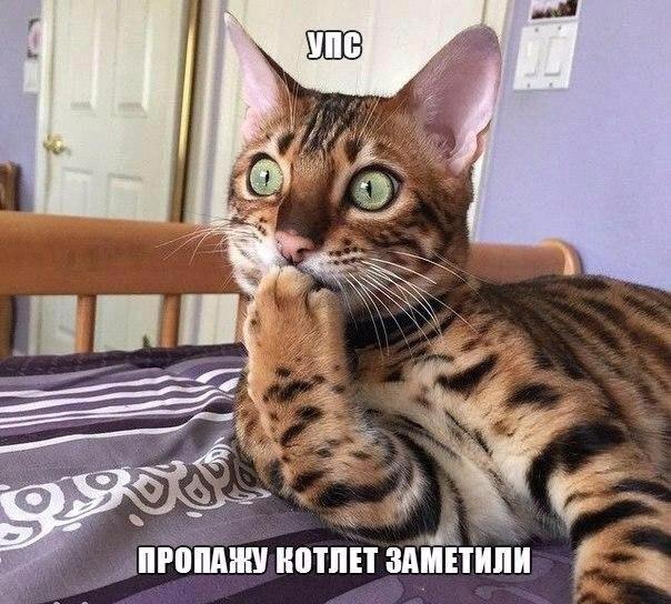Смешные картинки про котов с надписями - веселая нарезка 18