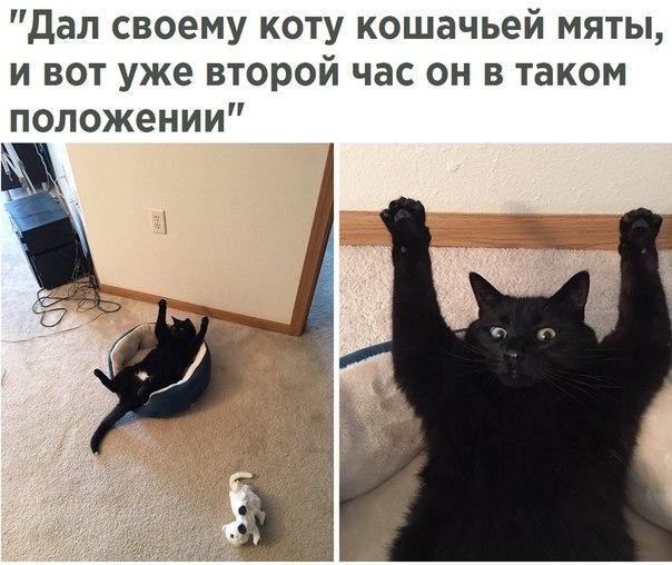 Ржачные картинки котов с надписями до слез