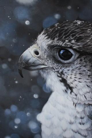Красивые и прикольные картинки птиц на заставку телефона - сборка 22