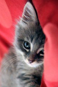 Кошечки картинки - прикольные и красивые на заставку телефона 9