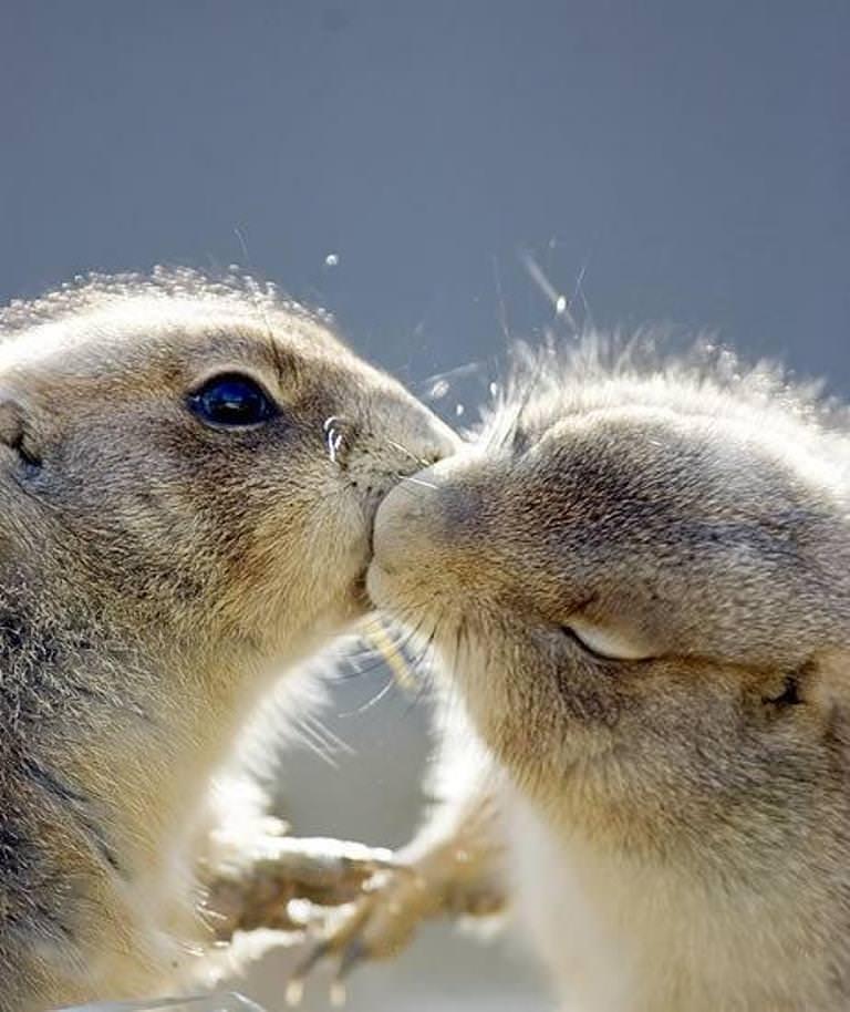 Картинка про поцелуй смешная, целовашки