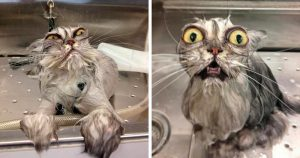 Очень смешные картинки и фотографии с котиками, котятами 3