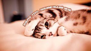 С добрым утром дорогой и любимый - милые открытки для парня 1