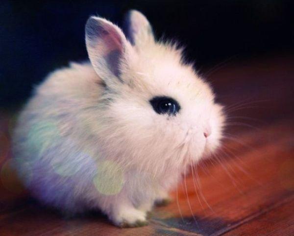 Забавные и смешные фотографии кроликов - подборка 2018 1