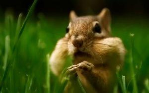 Удивительные фотографии животного бурундука - подборка 2