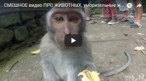 Смешные видео про животных с ютуба до слез - подборка 2018