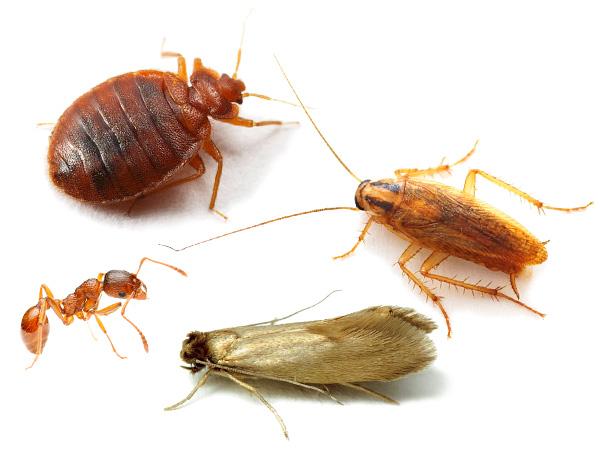 Борьба с домашними насекомыми натуральными средствами 1