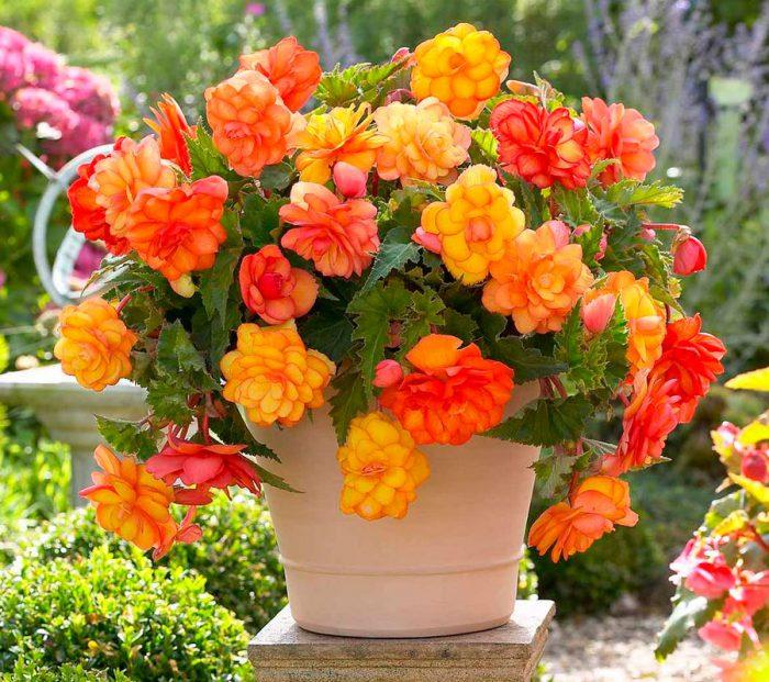 Лучшие комнатные растения для дома - список универсальных растений 1
