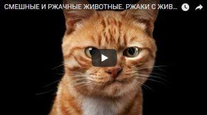 Очень смешные короткие видео до слез - подборка №4