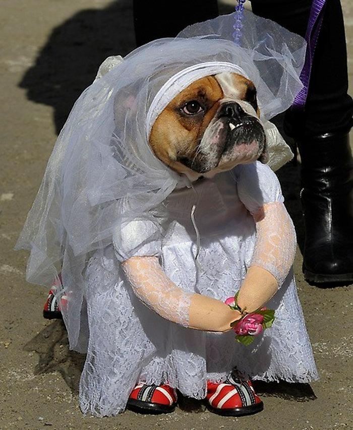 Смешные картинки про собак и щенков - подборка 1