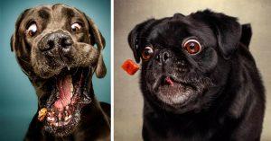 Смешные картинки про собак и щенков - подборка 2