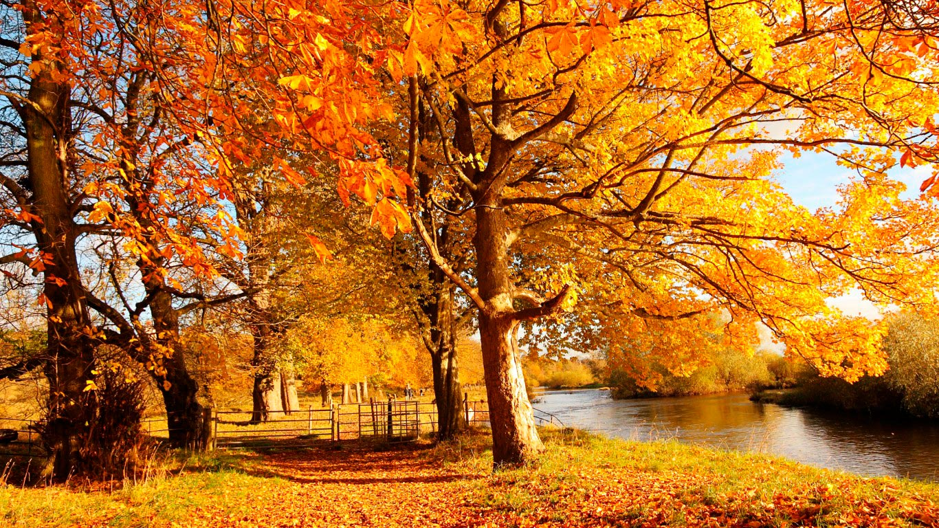 Картинки, картинка на золотую осень