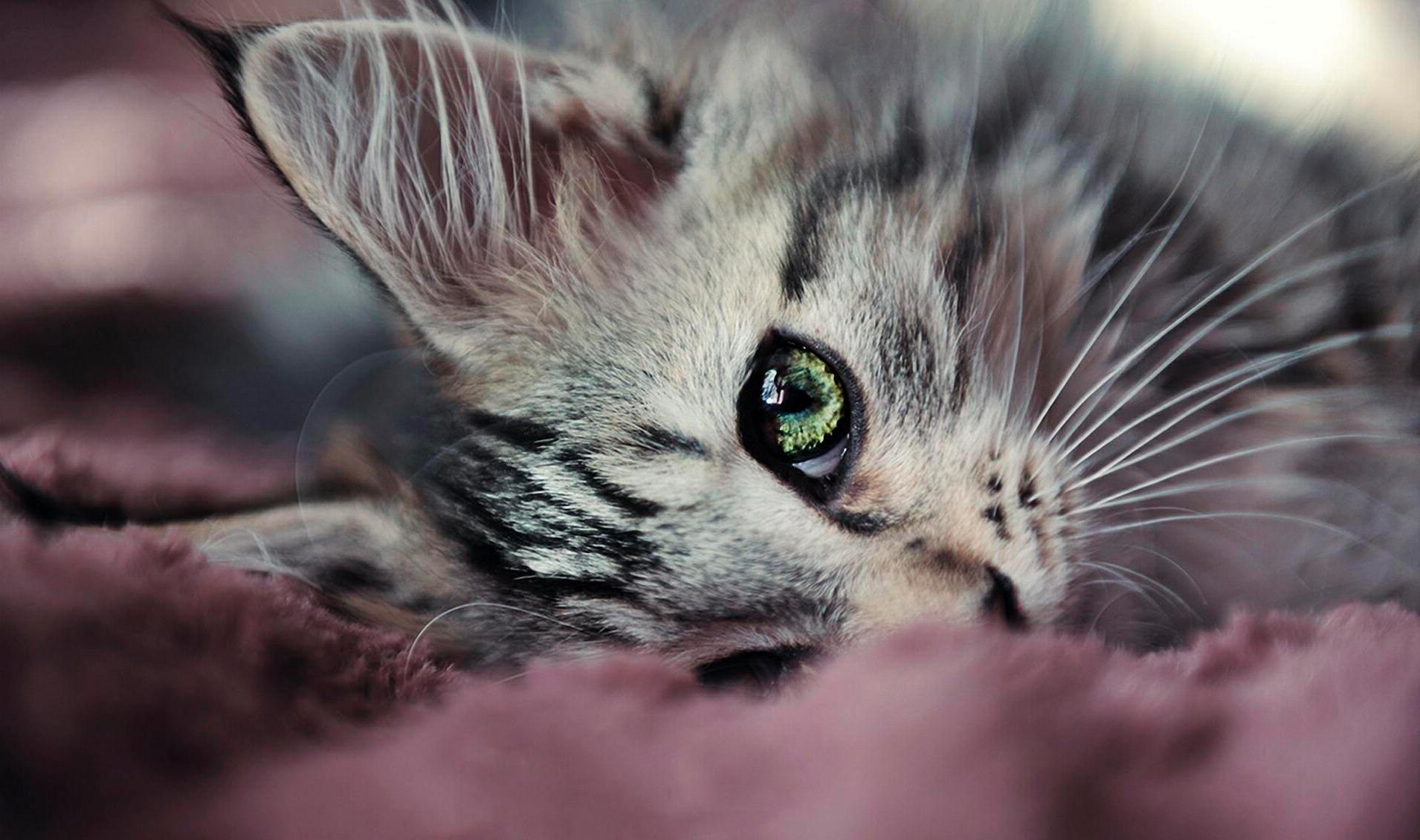 Котята красивые картинки на аву