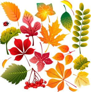 Прикольные картинки осенних листьев для оформления - подборка 1