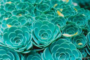Красивые и необычные картинки бирюзового цвета - сборка 3