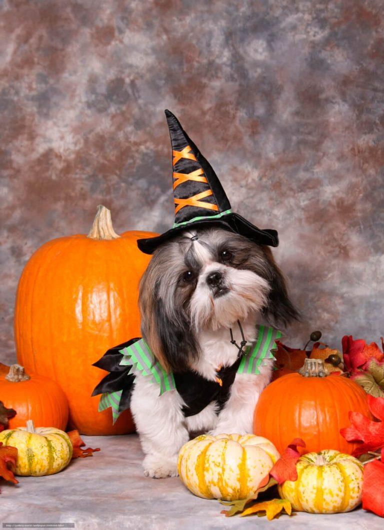 Хэллоуин картинки прикольные с животными, фотошоп урок картинки