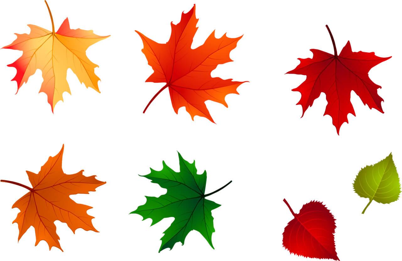 Картинки осенние листья для детского сада, надписью