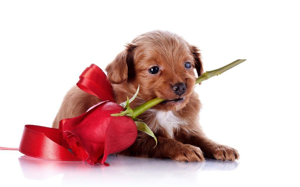 Картинки с животными с цветами с надписями, открытку