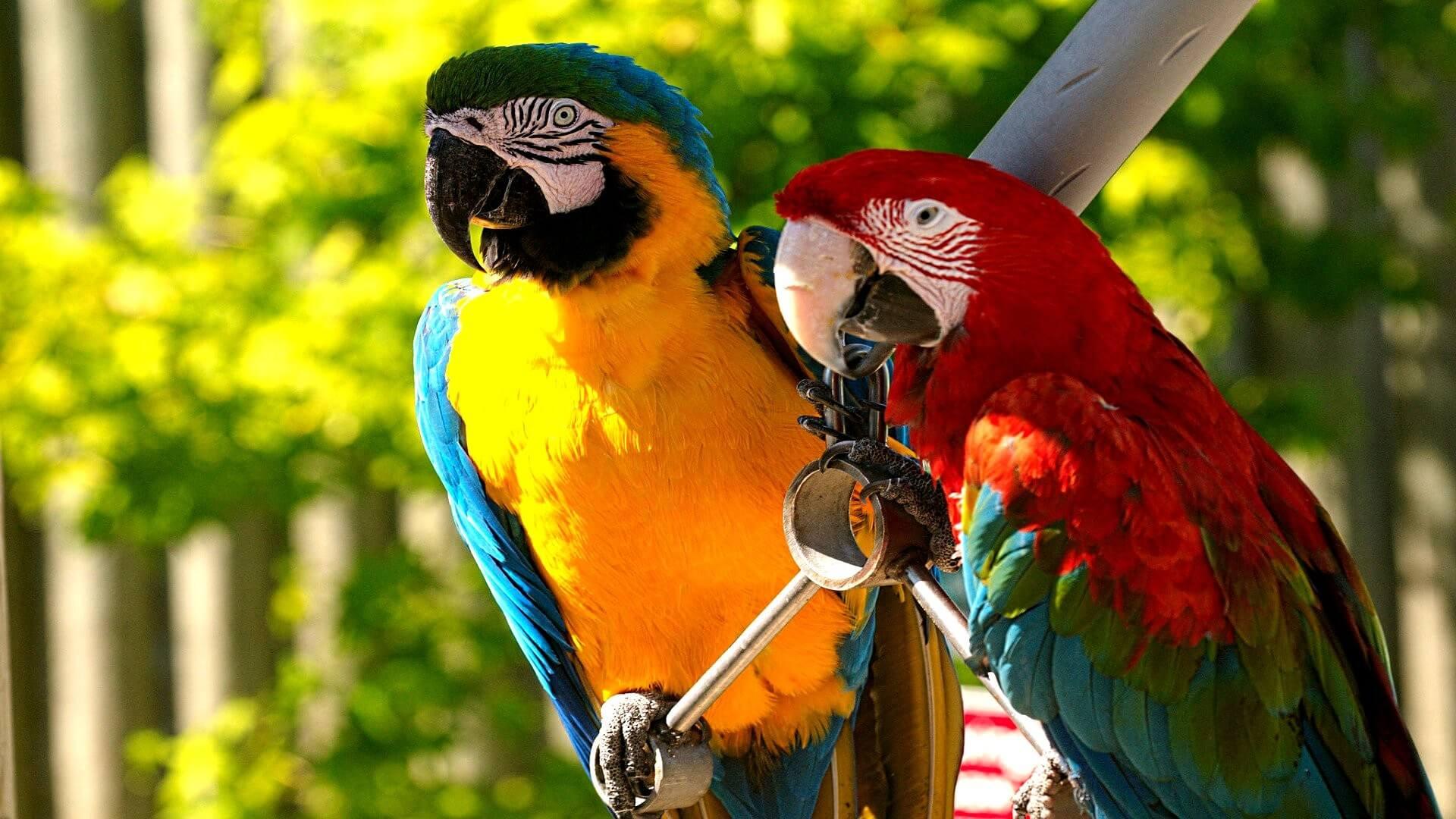 День, красивые картинки с попугаями на рабочий стол