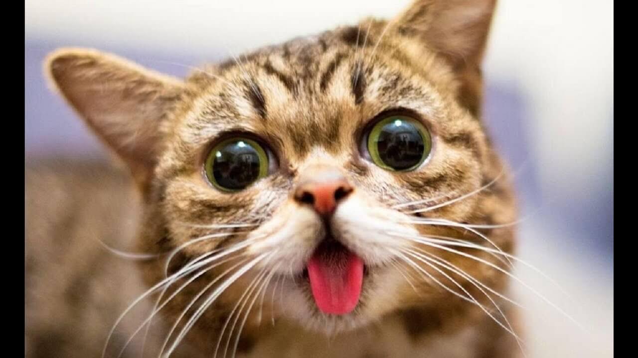 Прикольные коты видео смотреть