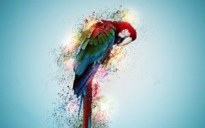 Необычные и красивые картинки на рабочий стол Попугаи 16