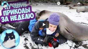 Подборка смешных видео роликов за декабрь 2018