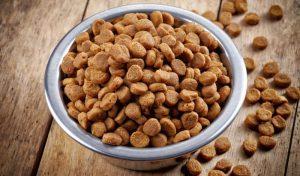 Питание для собак - сухой корм или консервы, чему отдать предпочтение 1