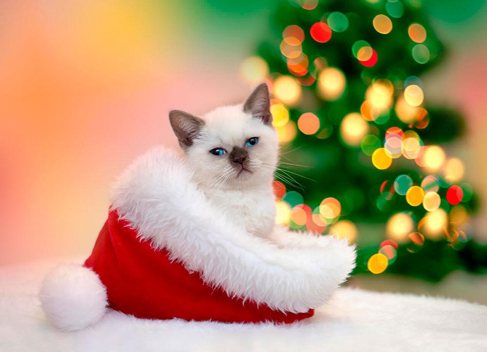 Новогодние картинки котов, днем