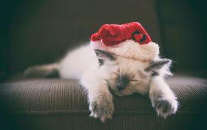 Кошки, котята, коты картинки в новый год - самые красивые 11