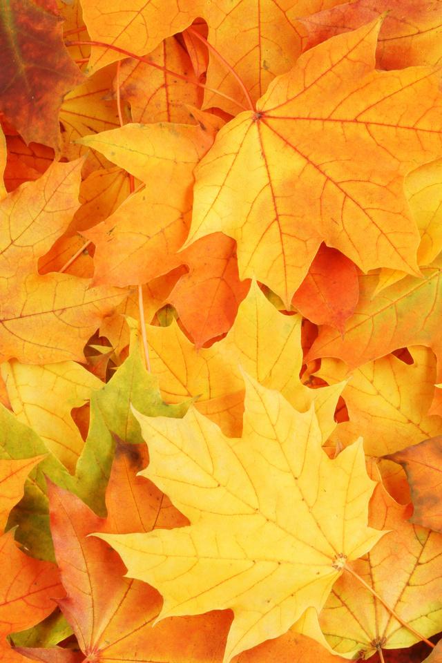 Вертикальные картинки осень на телефон