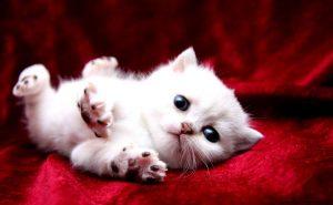 Подборка милых котов и кошек в картинках 16