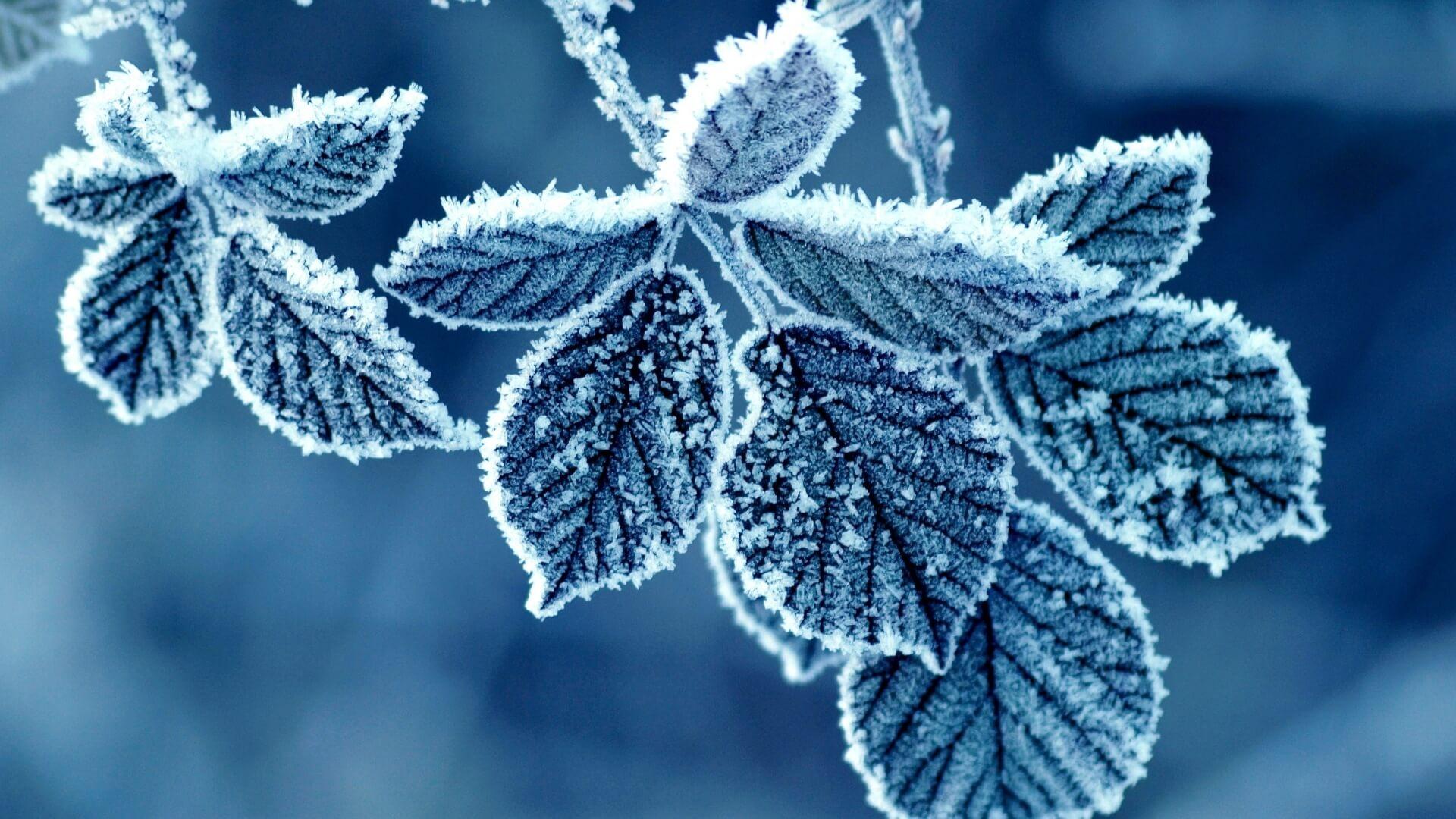 Скачать обои зимних картинок на телефон для заставки 7