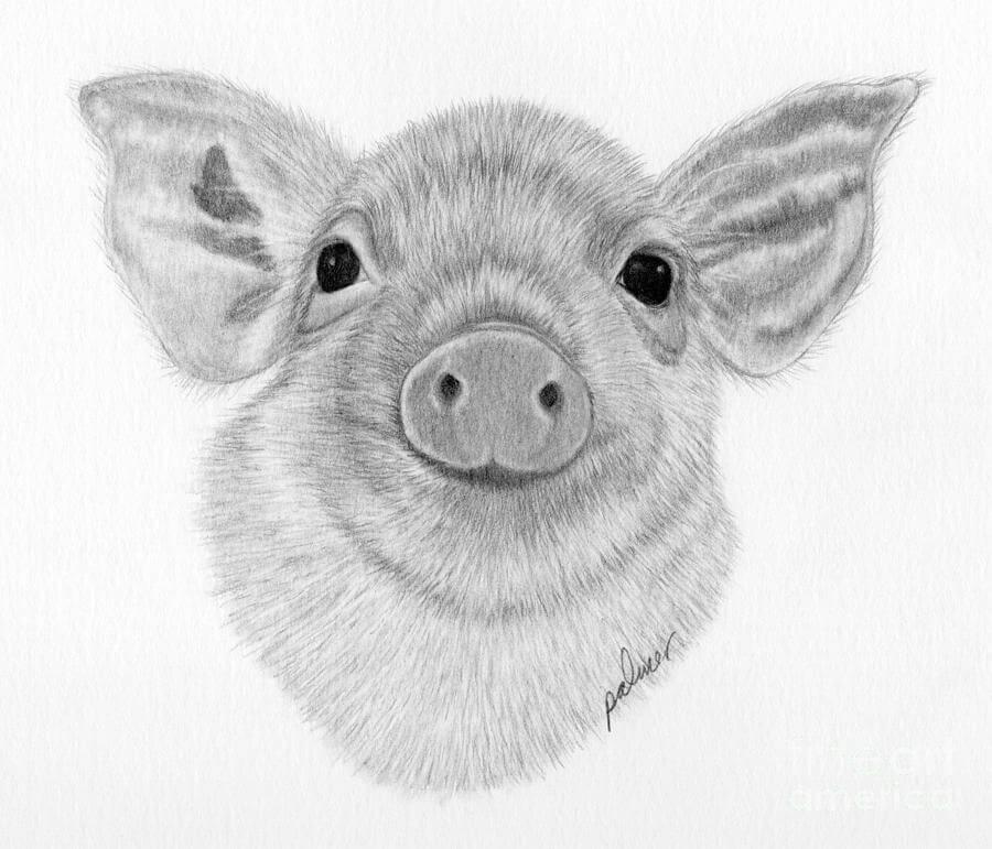 Балерина, рисунки свиньи прикольные карандашом поэтапно
