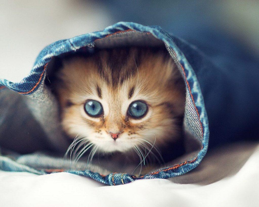Картинки котиков очень милых