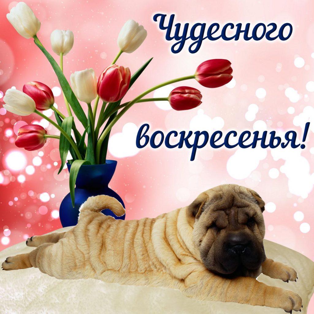 Николай, открытки с воскресеньем друзьям