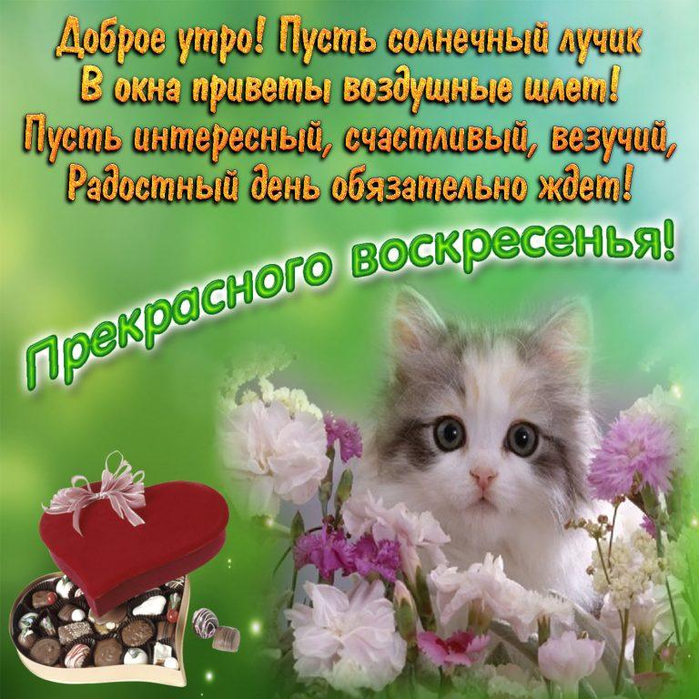 Картинки с добрым утречком воскресным, поздравление марта