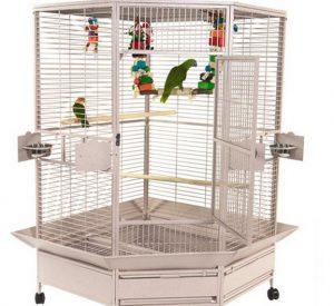 Дом для попугая - каким он должен быть 1