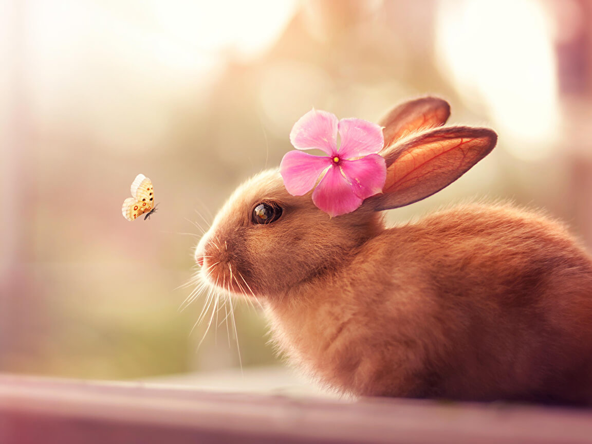 Милые и красивые животные картинки, картинки