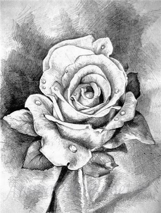 Рисунки для начинающих карандашом   лучшие 35 картинок (10)
