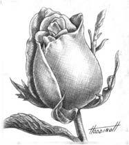 Рисунки для начинающих карандашом   лучшие 35 картинок (19)