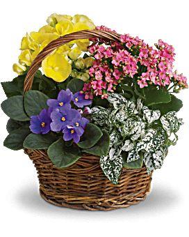 Букеты в корзине из живых цветов фото (5)