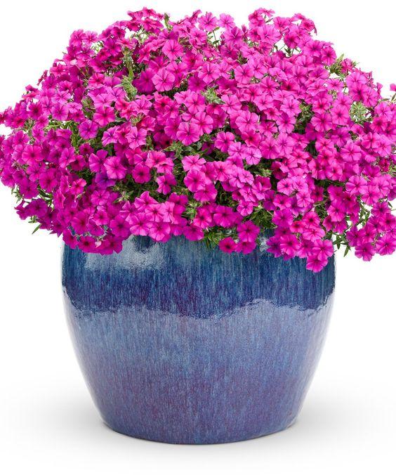 Букеты в корзине из живых цветов фото (9)