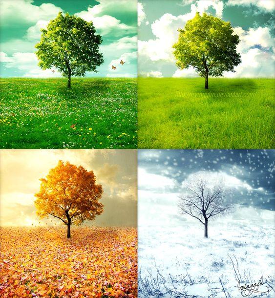 цветы, картинки деревьев в разные времена года королевском