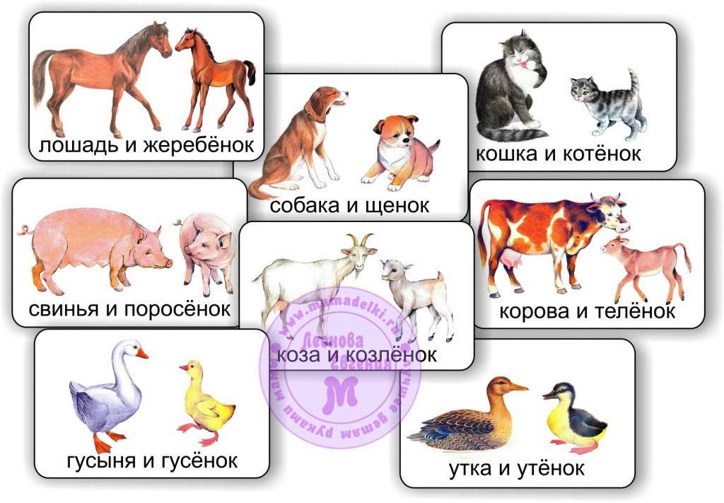 названия детенышей домашних животных с картинками вина занимают