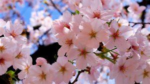 Заставки Весна для рабочего стола в хорошем качестве (16)