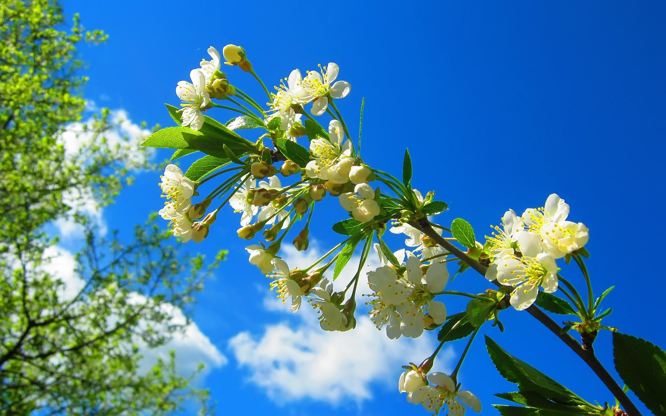 Картинки на рабочий стол красивые большие весна