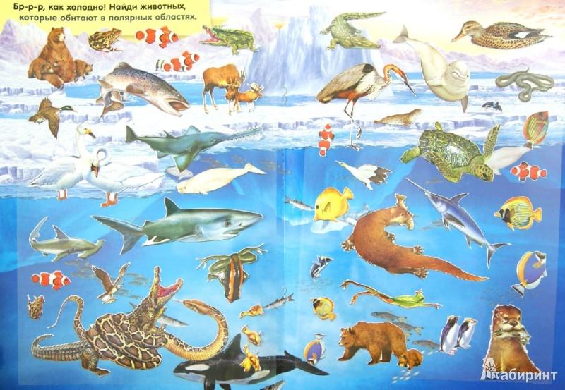 название морских животных с картинками разработчики