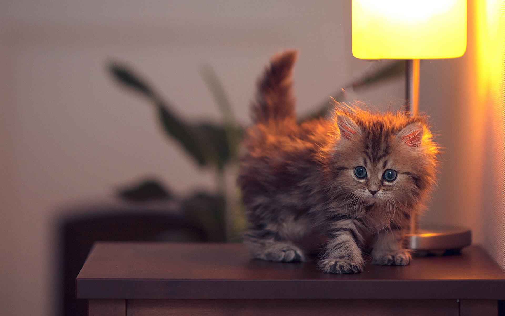 Установить картинки для рабочего стола котята